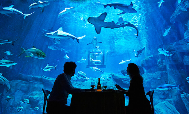 Paris Aquarium Lets Guests Sleep in Submerged Glass Room Surrounded by 35 Sharks 7