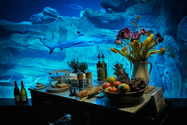 Paris Aquarium Lets Guests Sleep in Submerged Glass Room Surrounded by 35 Sharks 6