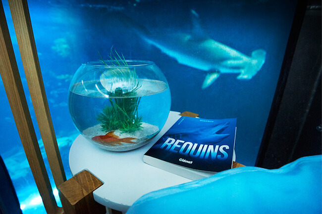 Paris Aquarium Lets Guests Sleep in Submerged Glass Room Surrounded by 35 Sharks 4