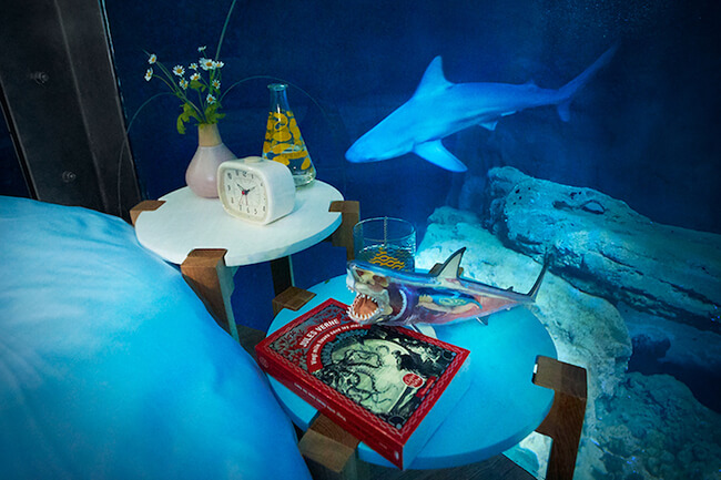 Paris Aquarium Lets Guests Sleep in Submerged Glass Room Surrounded by 35 Sharks 5