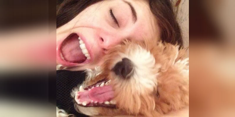 you love your dog more than humans feat