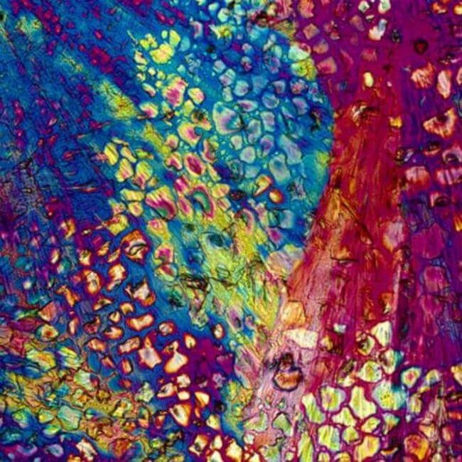HOW ALCOHOLIC DRINKS LOOK UNDER MICROSCOPE 14
