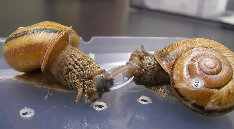 how to snails mate 2