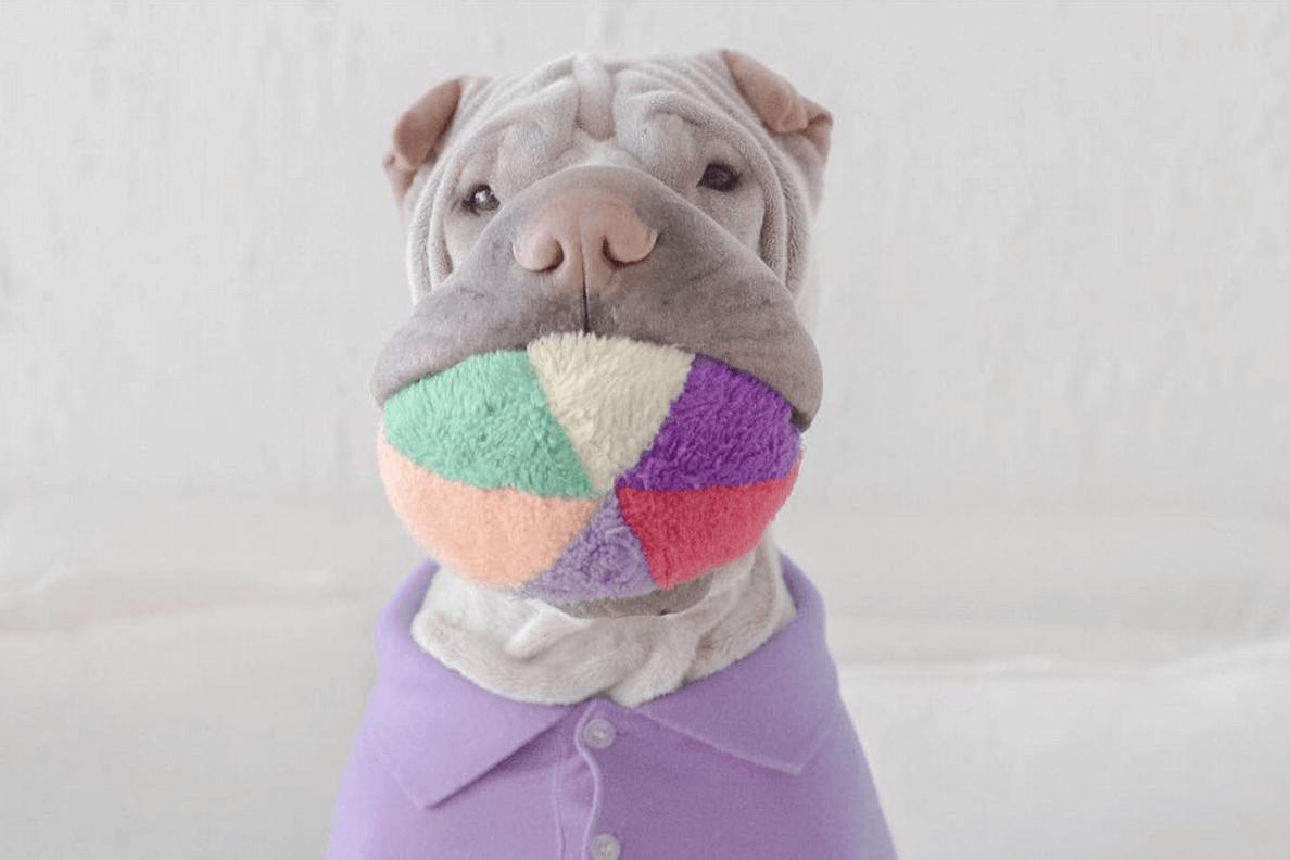 incredible wrinkle dog 11 (1)