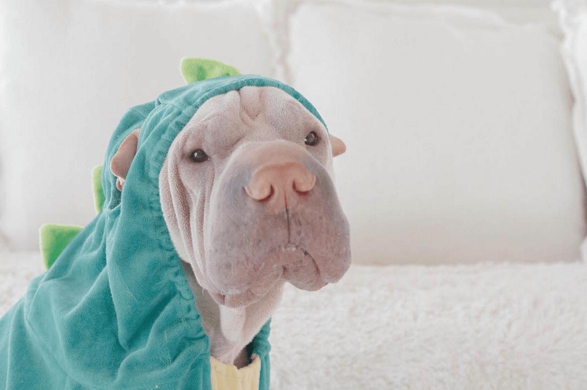 incredible wrinkle dog 3 (1)