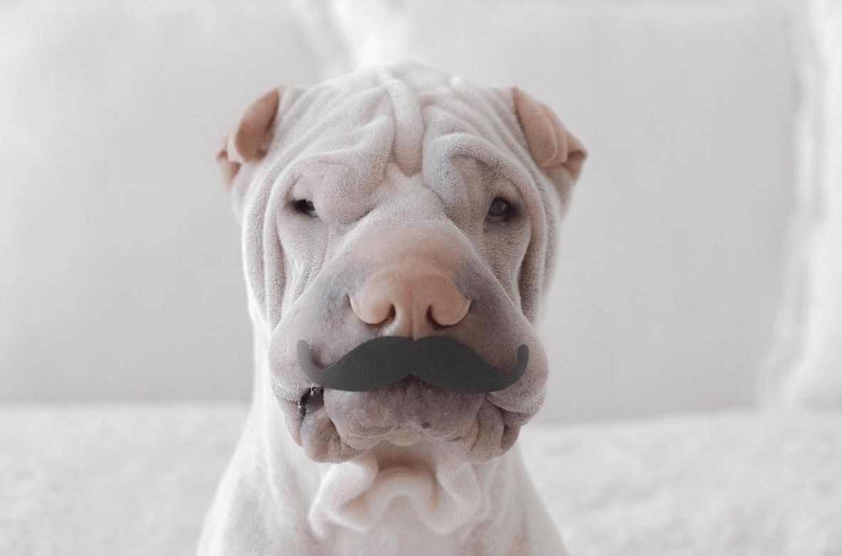 incredible wrinkle dog 7 (1)