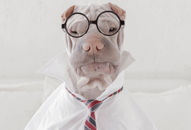 incredible wrinkle dog 9 (1)