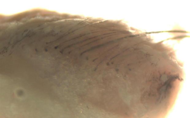 lab grown skin