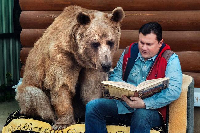 bear as a pet 3