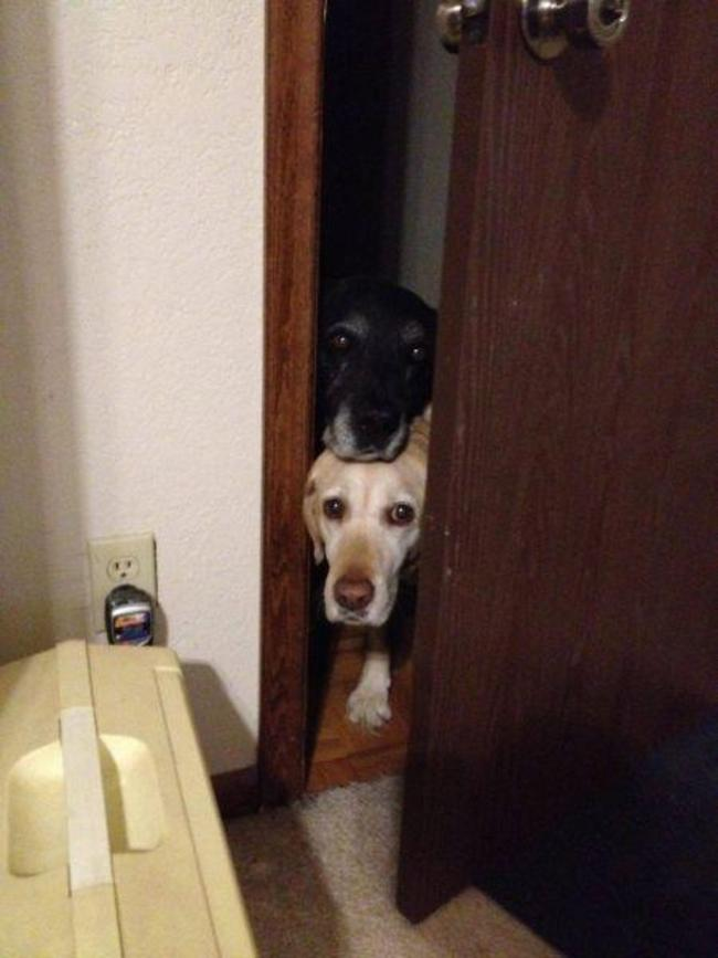 Dogs Sit With You While You Poop 12