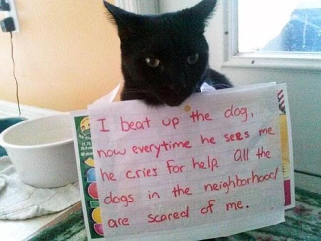 shaming cats 15