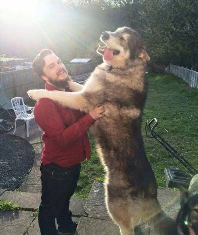 bigger dogs in the world 4