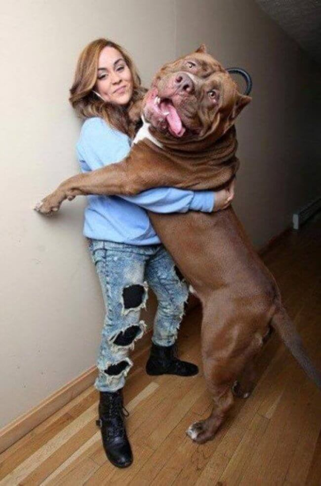 bigger dogs in the world 7