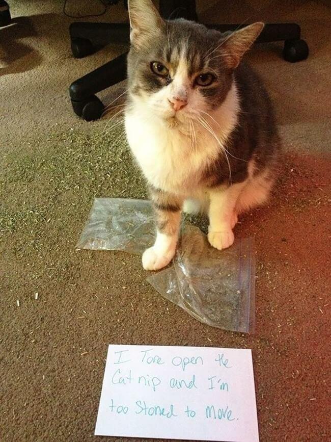 cat shaming 1