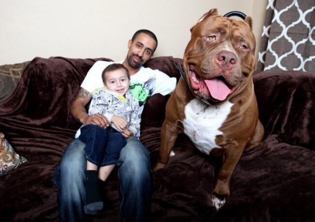 huge dogs of the world 24