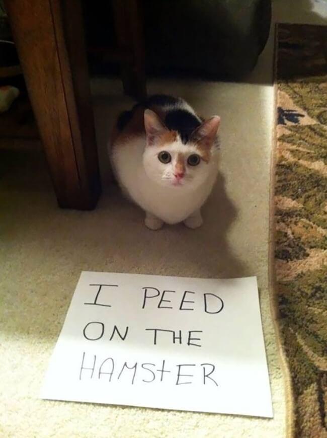 cat shame 3