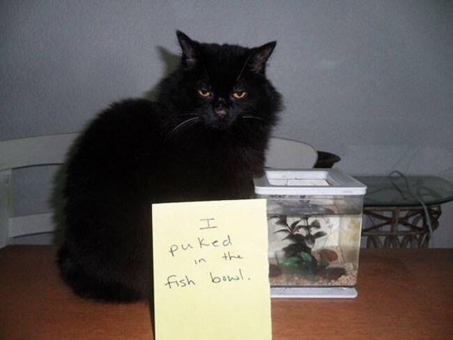 cats shaming 18