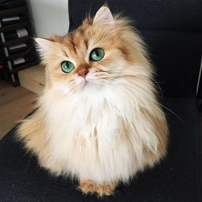 good looking cat 2