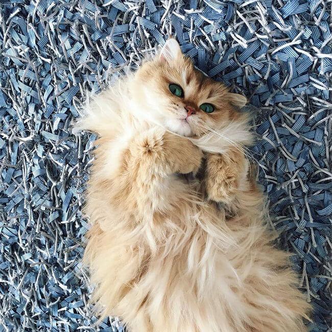 good looking cat 5