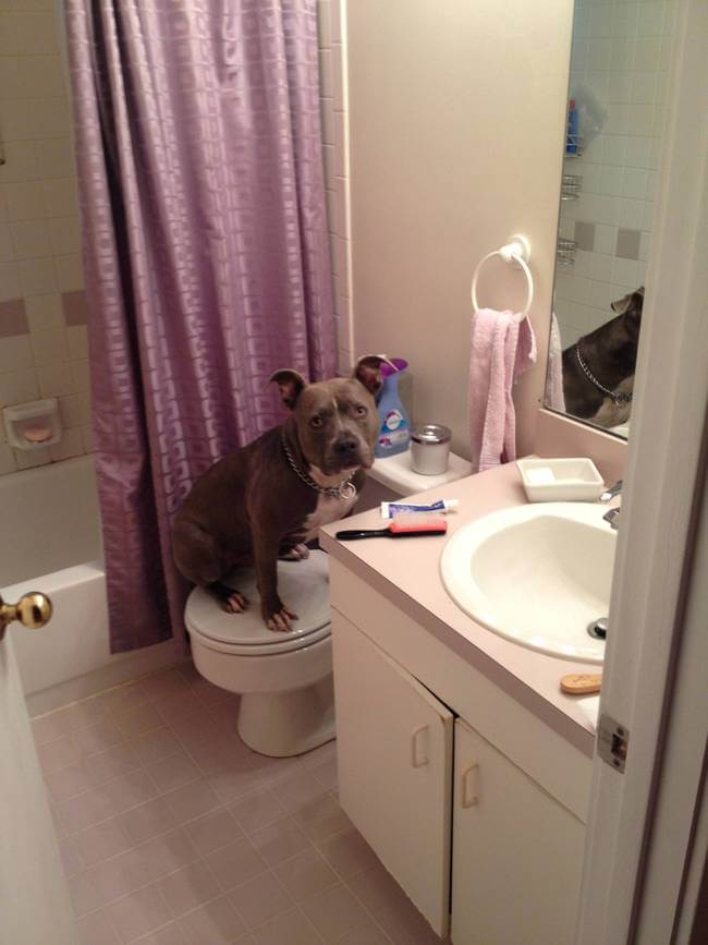 Dogs Sit With You While You Poop 9
