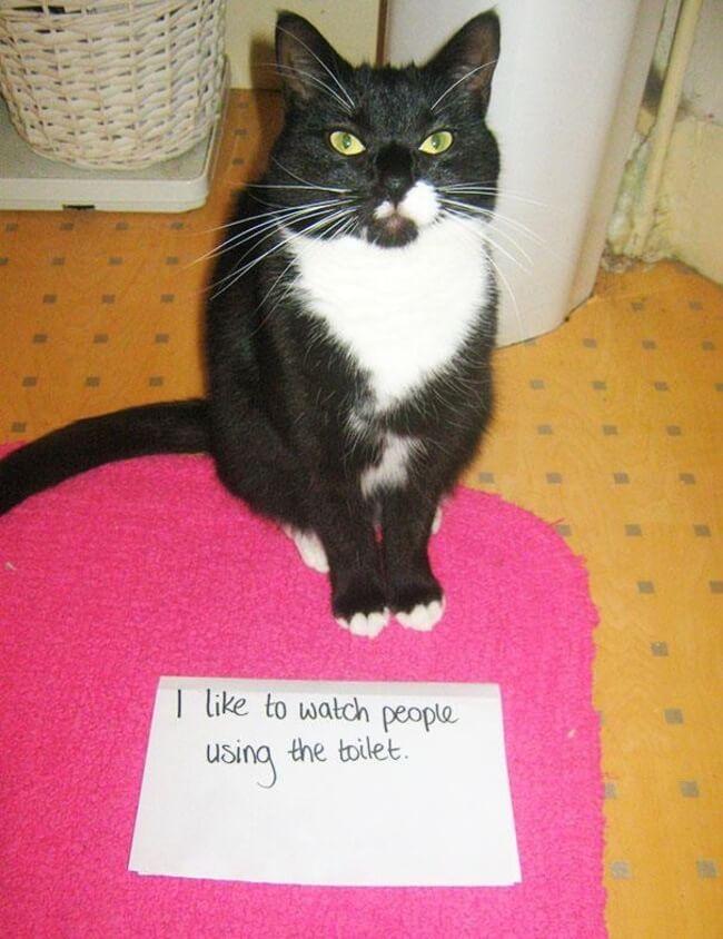 cats shaming 19