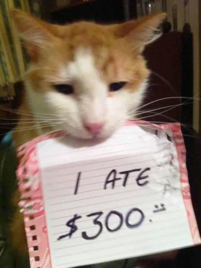 shaming cats 13