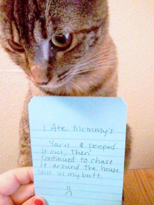 shaming cats 11