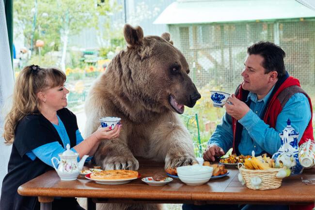 bear as a pet 1