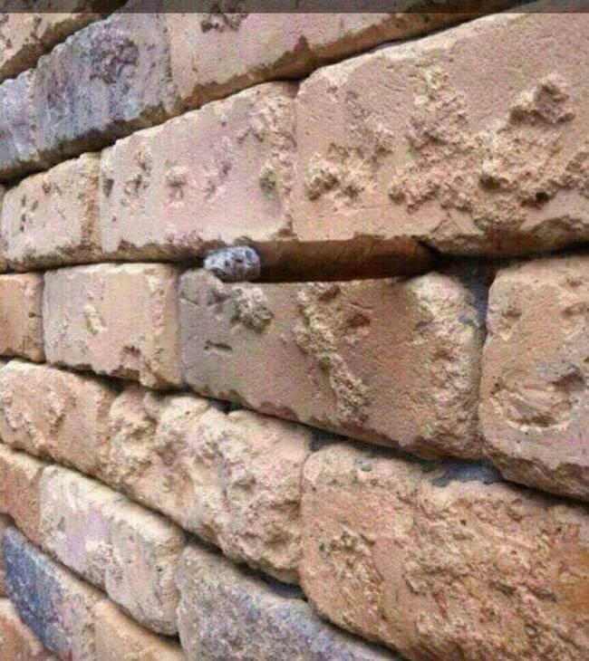 Brick Wall Illusion picture 2