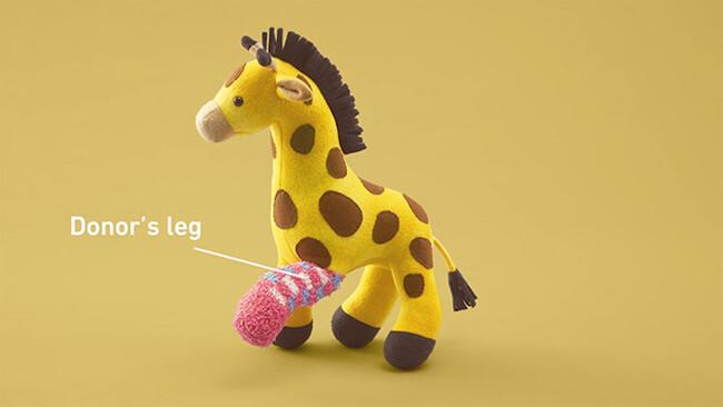 Stuffed Animals Get Limb Transplants 9