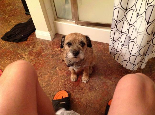 Dogs Sit With You While You Poop 18