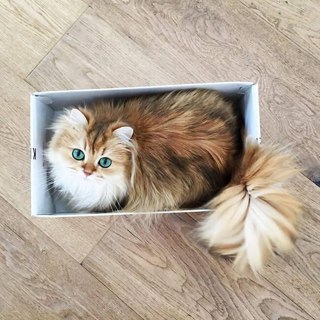 good looking cat 6