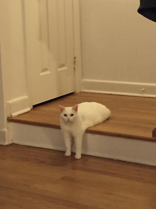 Awkward Half Cat photoshop battle 1