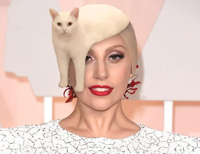 Half Cat photoshop battle 8