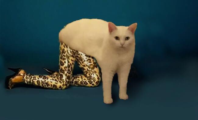Half Cat photoshop battle 15