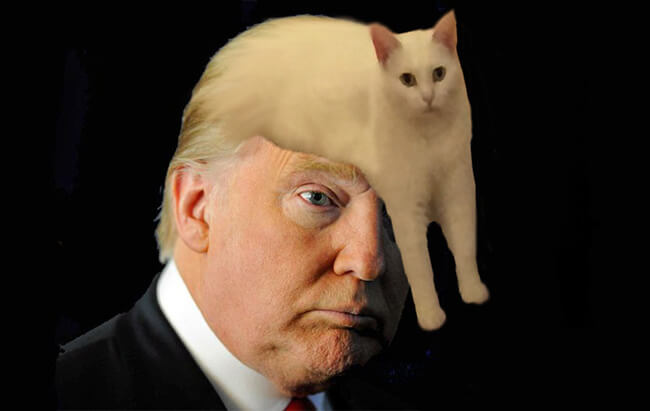 Half Cat photoshop battle 11