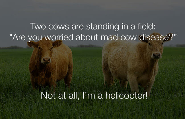 stupid jokes - two cows are standing in a field 7