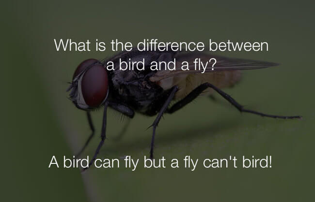 stupid fun jokes - what is the difference between a bird and a fly 29