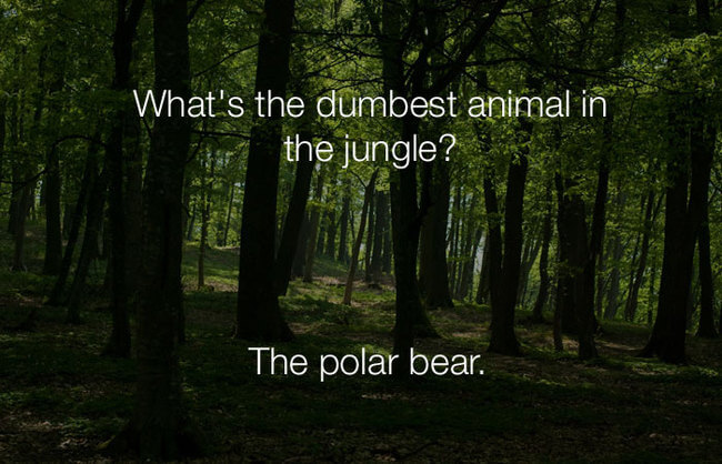 stupid lol jokes - what's the dumbest animal in the jungle 23