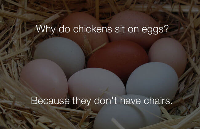 jokes - why do chickens sit on eggs 11