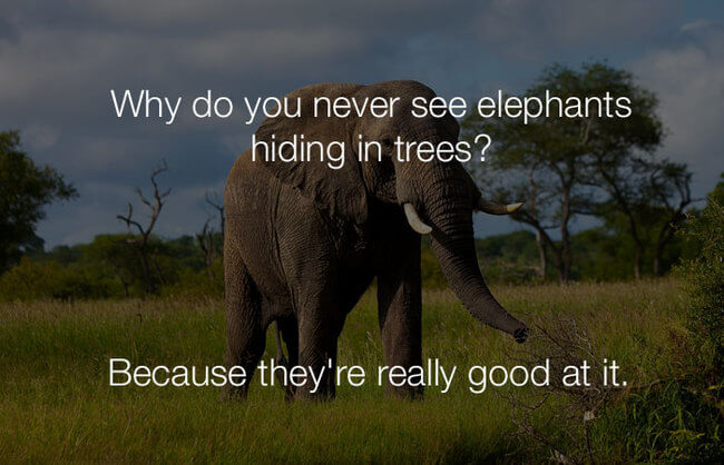 hilarious funny jokes - why do you never see elephants hiding13