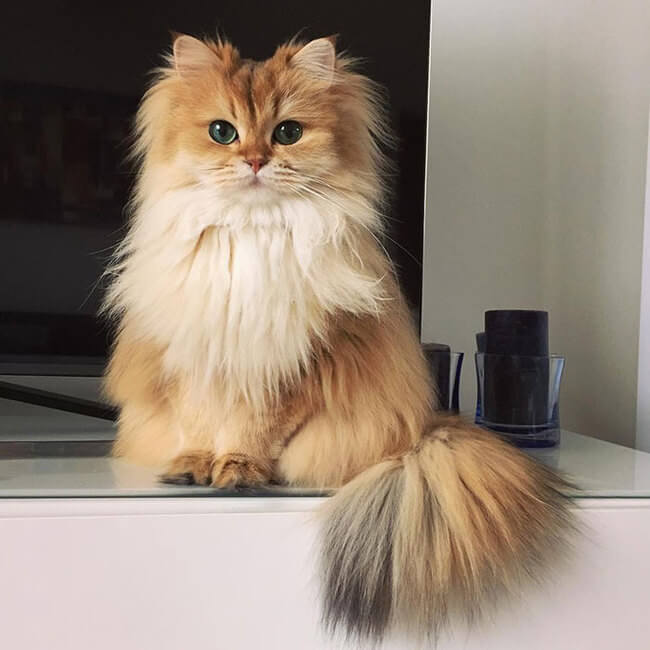 Meet Smoothie The Ridiculously Good Looking Cat That Was ...