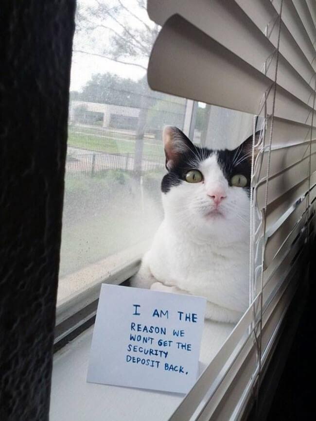 shaming cats 12
