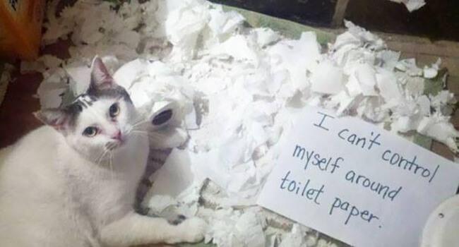 cats shaming 20