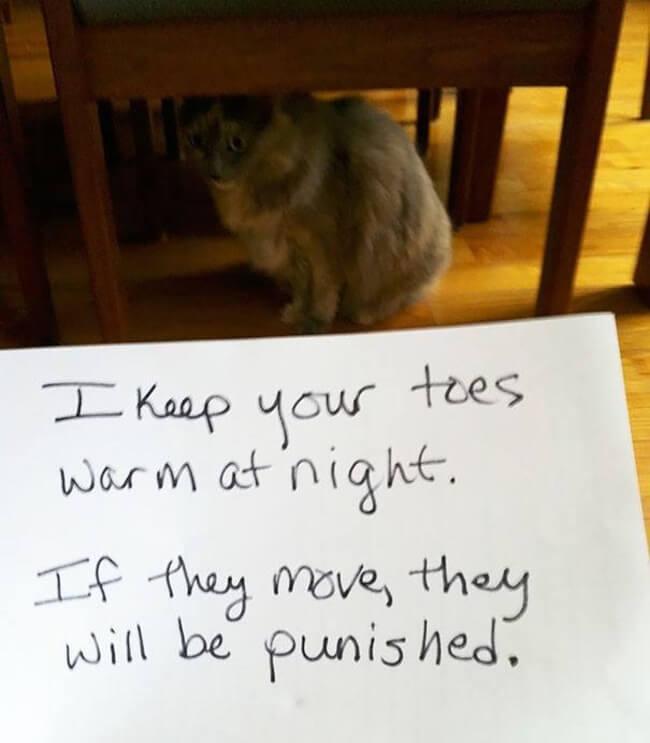 pet shaming 7