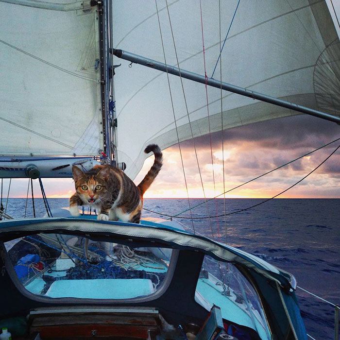 sailing-cat-travelling-world 11