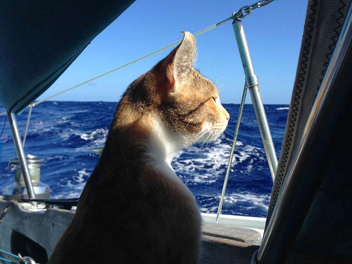sailing-cat-travelling-world 12