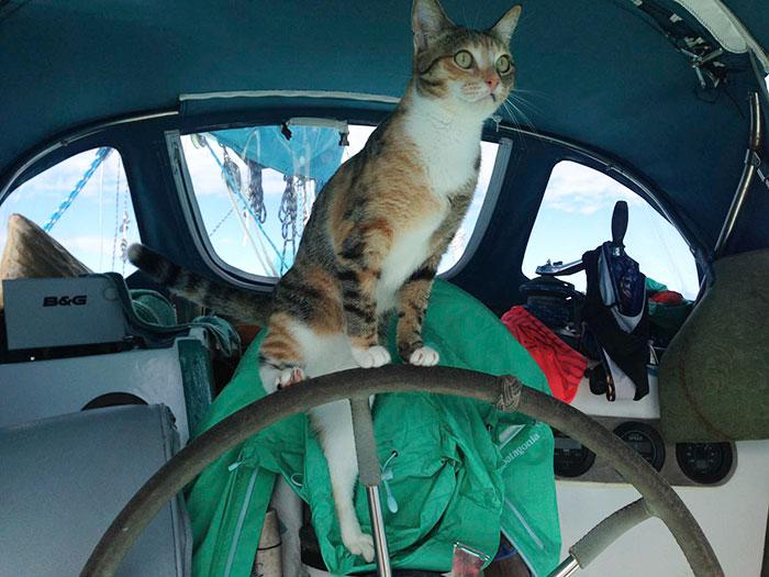 sailing-cat-travelling-world 13