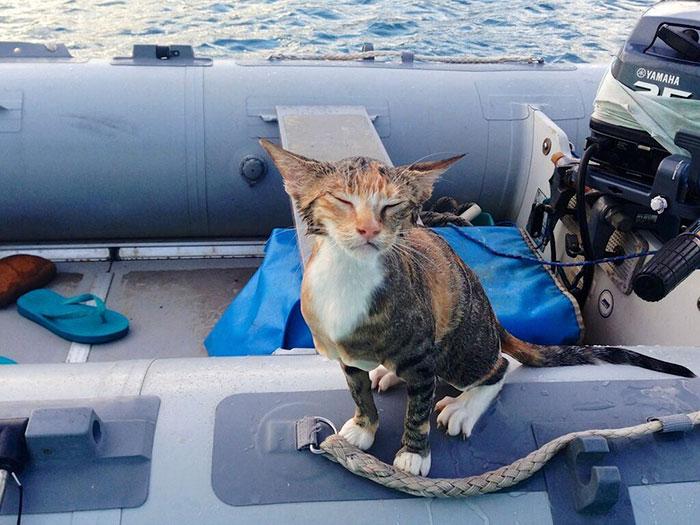 sailing-cat-travelling-world 17