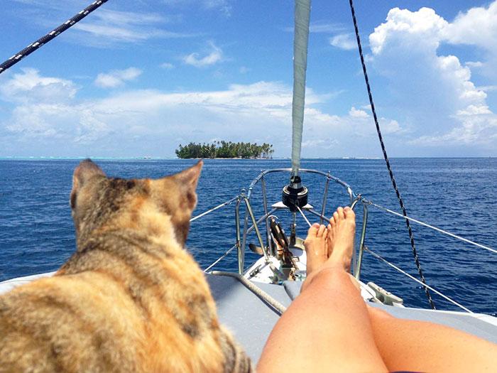 sailing-cat-travelling-world 2